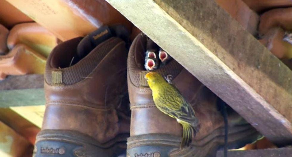 Usuarios de Facebook no pudieron evitar asombrarse al comprobar el ingenio que tienen algunas aves. (Foto: Captura)