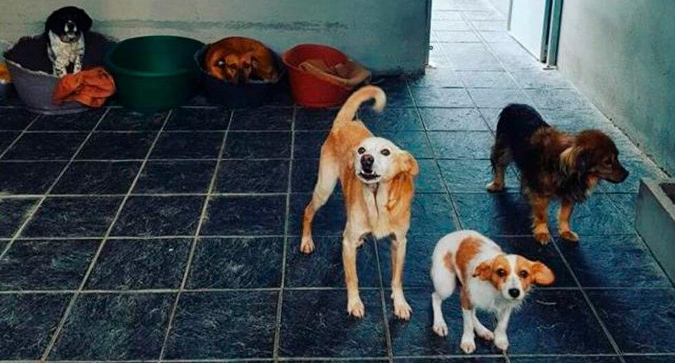 El insólito caso de 'Cuco', el perro que murió el mismo día que su dueña de toda la vida. La historia es viral en Facebook. (Asociación Protectora de Animales de Vilagarcía de Arousa)
