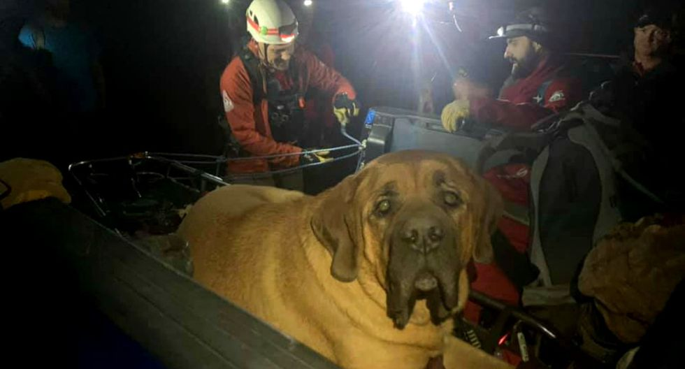 El can salió a dar un paseo con su humano, pero quedó exhausto y no se quiso mover más. (Foto: Facebook/Salt Lake County Sheriff's Search and Rescue)
