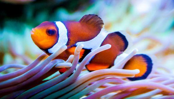 El pez murió de una forma inesperada y violenta. (Referencial - Pixabay)