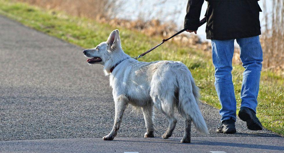 Se viralizó en Facebook el instante en que un rayo cae sobre un hombre mientras paseaba a sus perros. (Foto: Referencial/Pixabay)