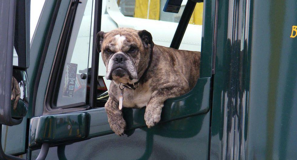 El hombre dejó al animal en el vehículo mientras realizaba un recado, pero, al parecer, la espera se le hizo demasiado larga al can. (Foto: Referencial/Pixabay)