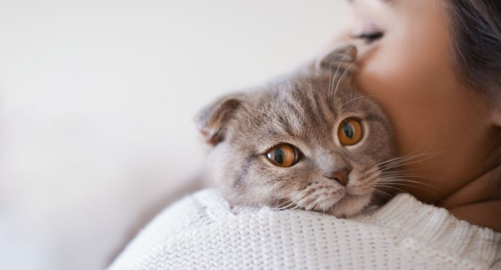 Los gatos son animales adorables y se caracterizan por ser independientes. (Foto: Shutterstock)