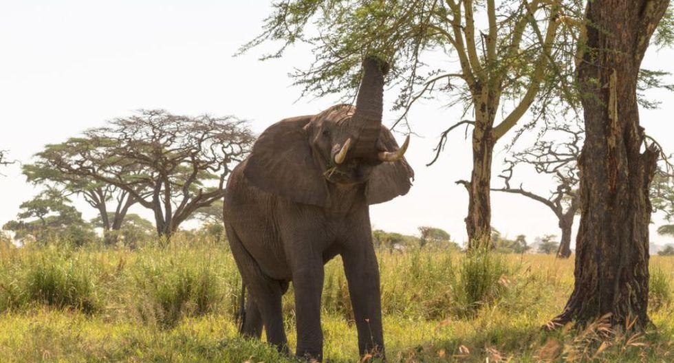Los elefantes son parte de lo que se considera 'megafauna'. (Foto referencial: Shutterstock)