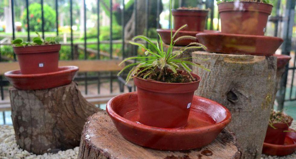 Plantas carnívoras del Parque de las Leyendas. (Foto: Andina)