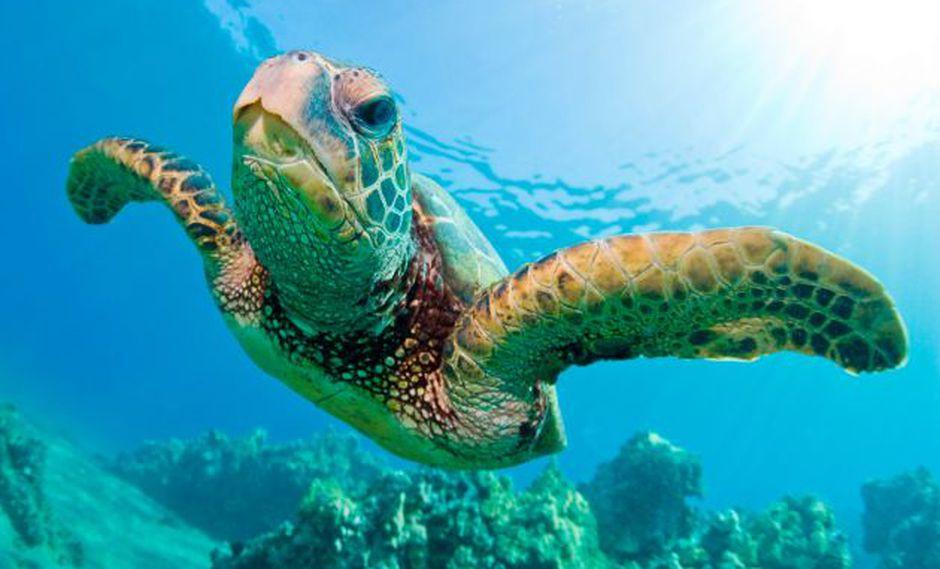 YouTube viral: Tortuga vuelve al mar gracias a una prótesis ortopédica y enternece a miles