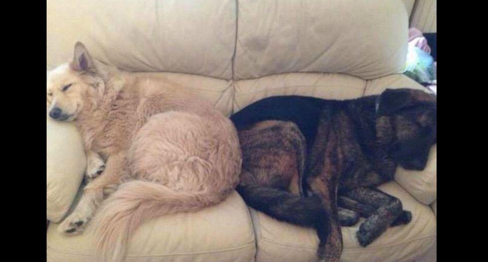 Usuarios de Facebook no pudieron evitar conmoverse al conocer la historia de los canes. (Foto: Beth Fisher)