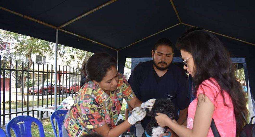 Esta actividad se realizará en el Parque del Bombero, ubicado en la cuadra 14 de la Av. César Canevaro (Lince) a partir de las 9:00 a.m. hasta la 1:00 p.m. (Foto: Fundación Rayito)