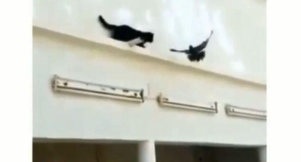 Usuarios de Facebook se divirtieron con la peculiar forma en que una paloma se libró de ser cazada por un gato. El video viral ha generado risas en la red social. (Foto: Captura)