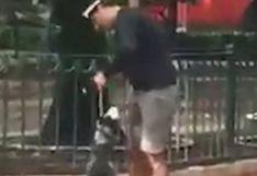 Paseador de perros ahorca a un husky siberiano hasta desmayarlo