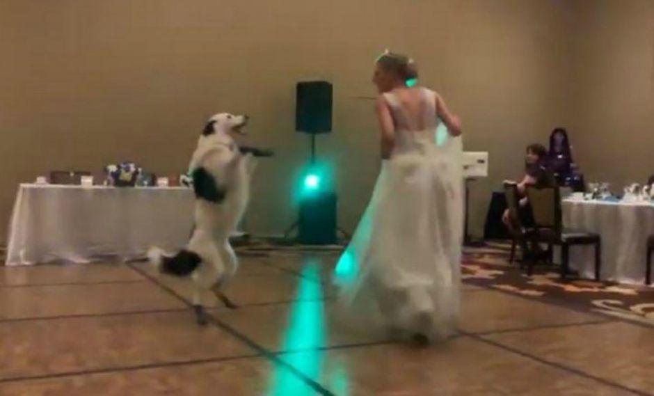 Novia celebra su boda bailando con su perro y se vuelve viral