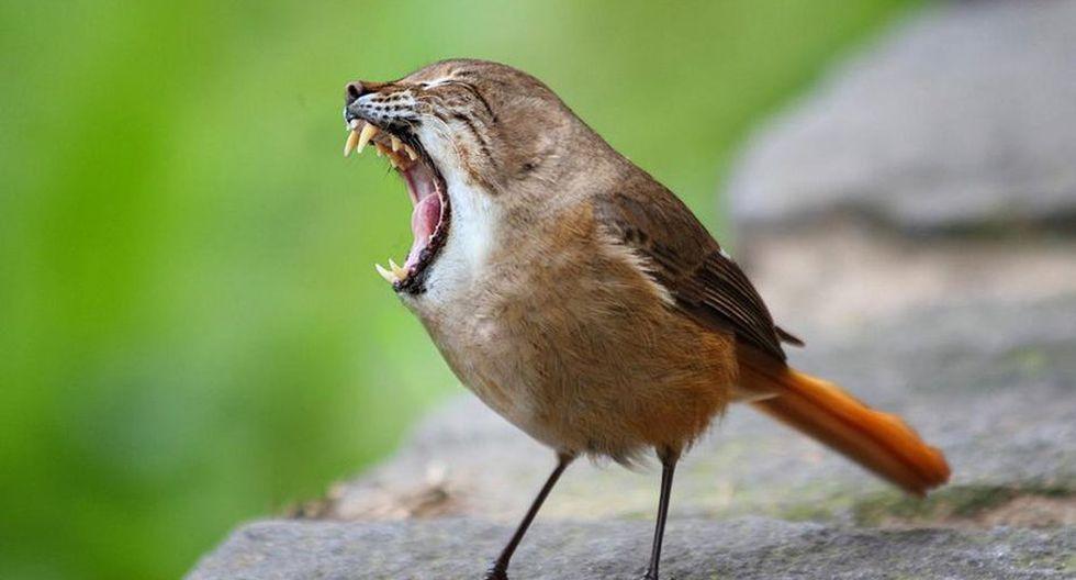 Un pájaro con colmillos. (Foto: Mashable)