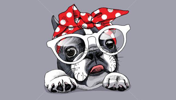 Perros con cataratas, problemas más comunes de lo que piensas. (Shutterstock)
