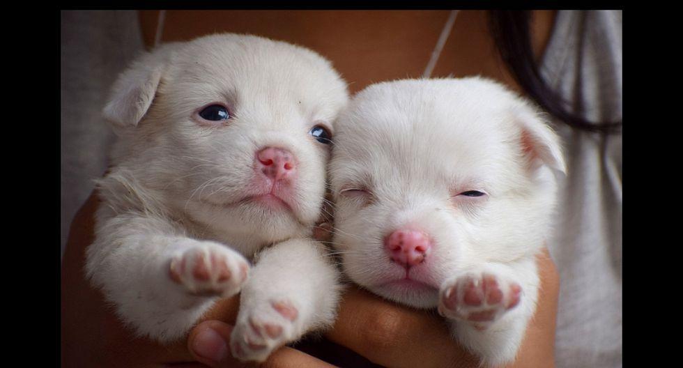 El video de los canes tiene cientos de reproducciones. (Referencial - Pixabay | YouTube)