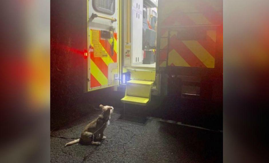 Perro se niega a alejarse de ambulancia mientras su dueño es atendido y se vuelve viral