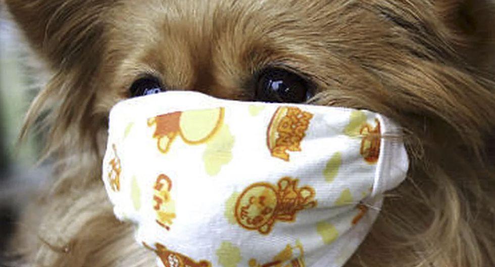 ¿Cómo hacer más fácil una cuarentena para tu perro? (Foto: Meniga)