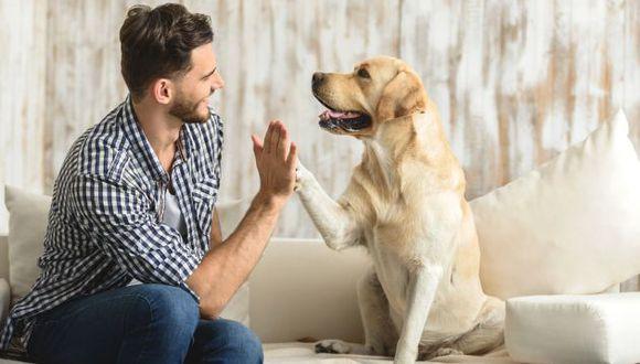 La prevención es la clave para asegurar la salud de las mascotas. Foto: Shutterstock