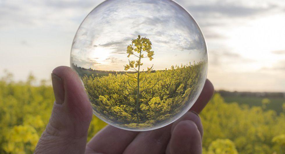 Según la WWF, todos podemos ayudar a la sostenibilidad del planeta (Foto: Shutterstock)