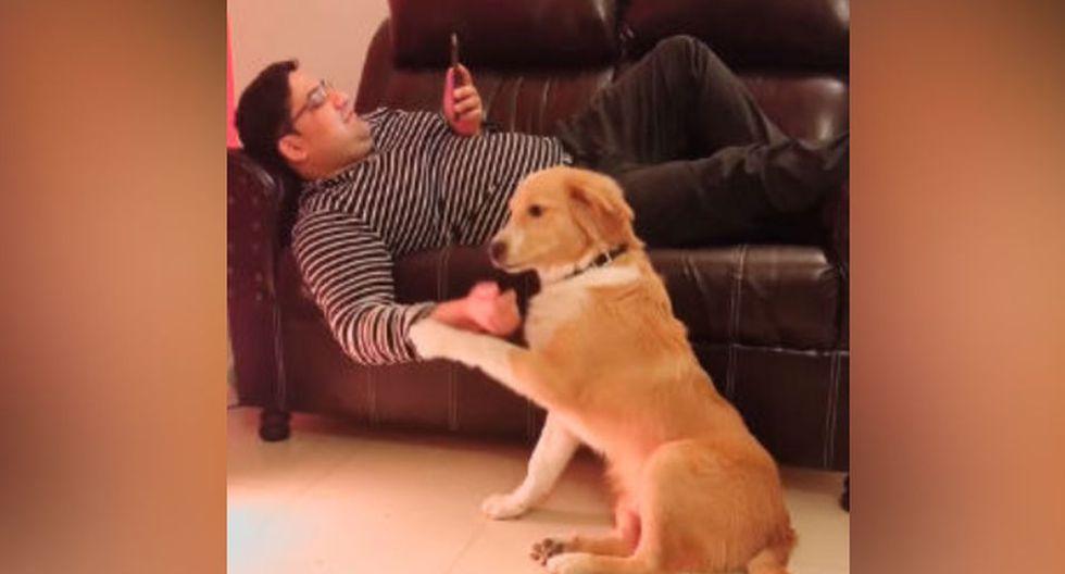 El perro ha causado gran impresión con su accionar. (YouTube: ViralHog)