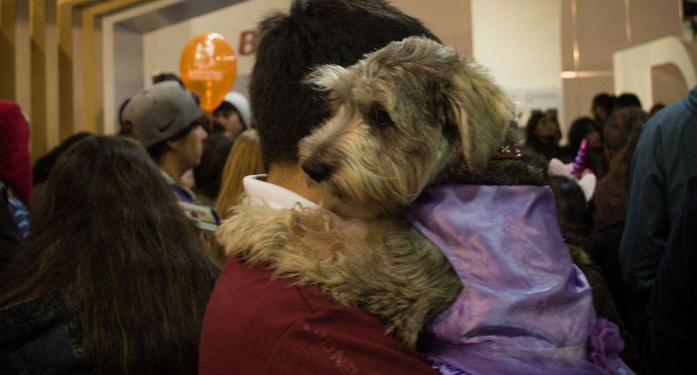 Las mascotas tendrán dos días de fiesta en el Latin Pet.