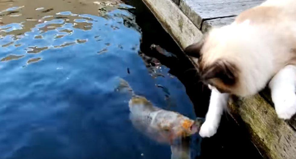 El gato se echó sobre un camino de madera que rodea dicho estanque y movió una de sus patitas para así poder tocar al pez. (YouTube: ViralHog)