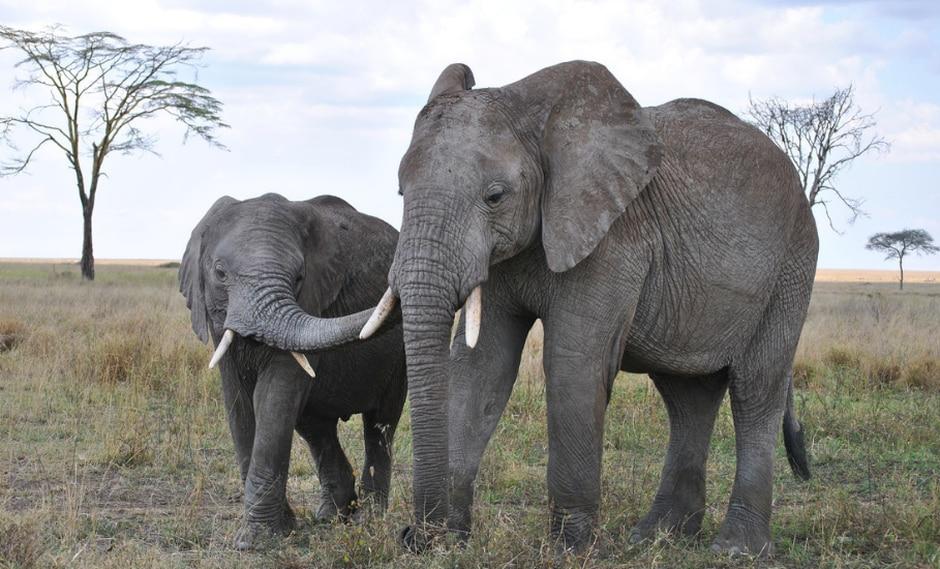 YouTube: A los elefantes les encanta bailar y más aún si es al ritmo del violín | VIDEO