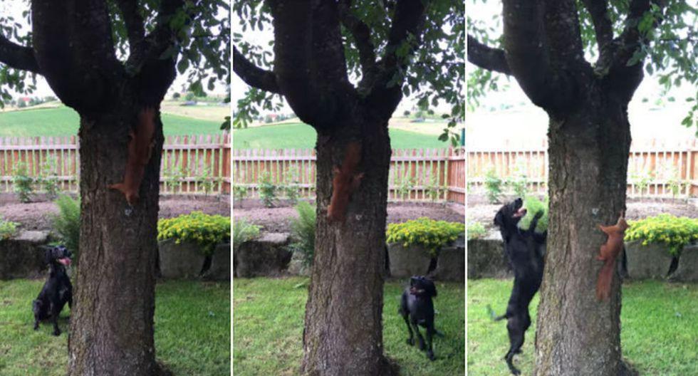 Lejos de tener la intención de hacerle un daño, el perro, a manera de juego, comenzó a moverse alrededor de dicho árbol con el fin de atrapar a la ardilla. (YouTube: ViralHog)