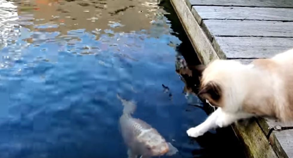 Ambos animales son protagonistas de un video que ha dado la vuelta al mundo. (YouTube: ViralHog)