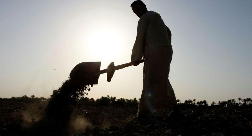 Las autoridades y los agricultores creen que en la mayor parte de los casos son obra de individuos malintencionados. (Foto referencial: AFP)