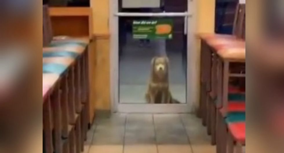 La historia del perro fue publicada en redes sociales y se volvió viral casi de inmediato. (Foto: Captura)