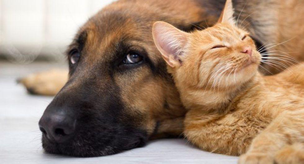 ¿Perro o gato? (Foto: Shutterstock)