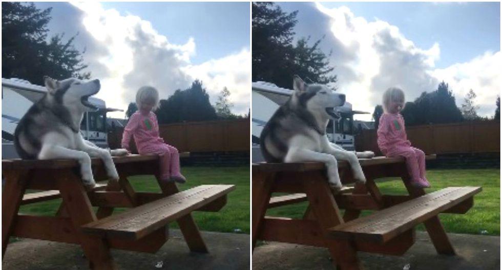 Se hizo viral en YouTube la curiosa reacción de un perro cuando escuchó a su dueña cantar. (Foto: Captura)