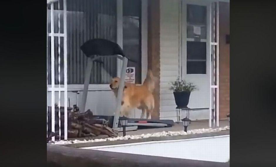 El perro se ejercita con total normalidad en una trotadora. (Facebook: @MiGuauPe)