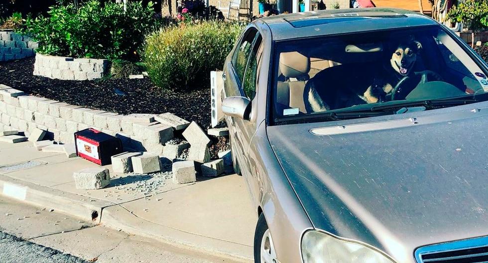 Hombre dejó a su perro dentro de su auto y este se cobró la peor de todas las venganzas. La historia es viral en Facebook. (Foto: KatieKPIX)
