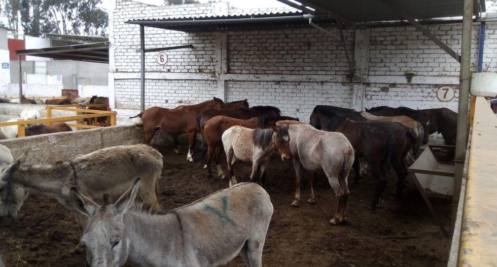 Equinos iban a ser llevados a un camal para ser sacrificados. (Foto: Difusión PNP)