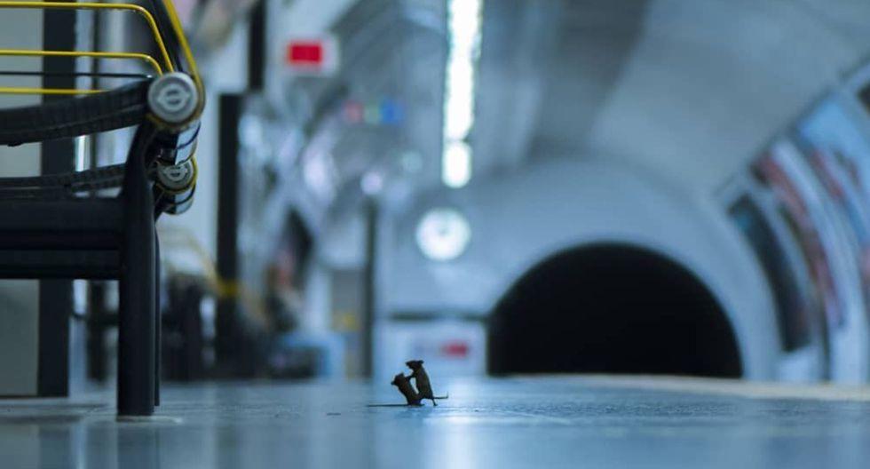 'Pelea en la estación', la imagen que ha ganado los premios Wildlife Photographer. (Foto: Instagram)