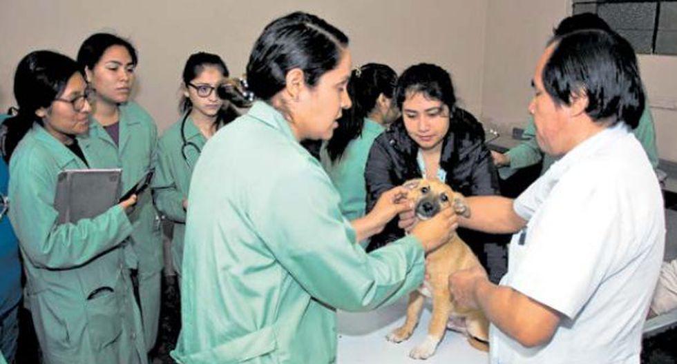 En esta posta, los animales en necesidad son atendidos por profesionales y estudiantes de Veterinaria de la Universidad Científica del Sur. (Foto: Difusión)