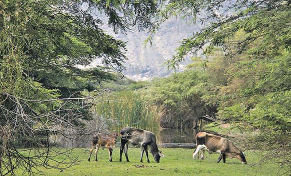 Desde el 2000, una cooperativa cuida estos paisajes bucólicos en La Libertad. En el 2004, el Bosque del Cañoncillo fue reconocida. (Foto: Conservamos por Naturaleza)