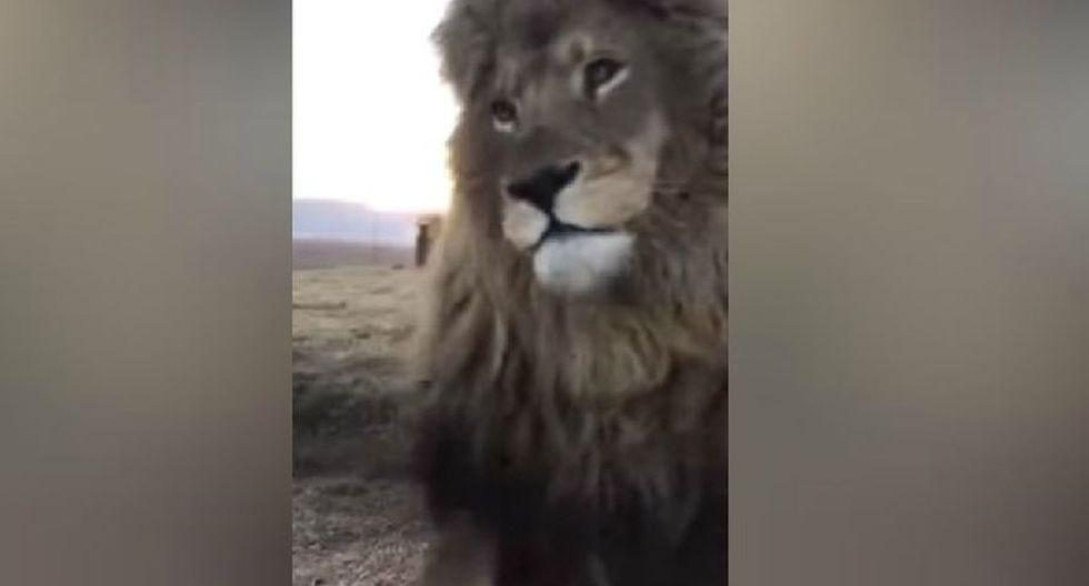 El clip ha dado la vuelta al mundo por lo que hizo este león. (YouTube: ViralHog)