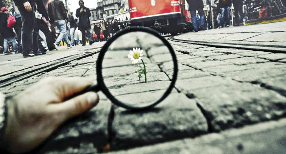 Una flor lucha por su vida en una calle de Estambul. Una metáfora sobre nuestra relación con la naturaleza. (Foto: Salih Agir)