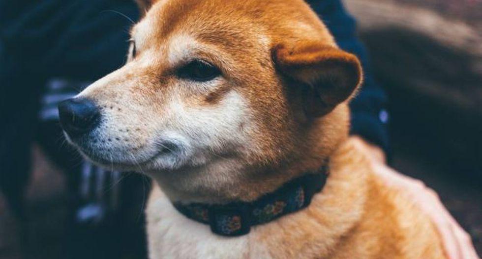 Perro se hizo famoso en Google Maps.