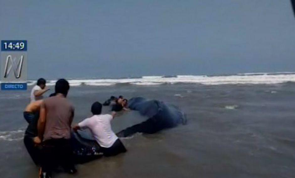 Joven ballena que se encuentra varada desde muy temprano en la playa del distrito Lagunas. (Foto: Captura Canal N)