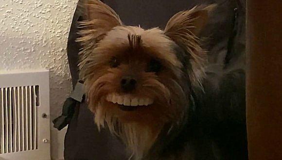 """""""Thomas, ¿qué estás haciendo? Amigo, ¿qué haces?"""", le preguntó el hombre a su perro sin poder dejar de reír. (Foto: Captura)"""