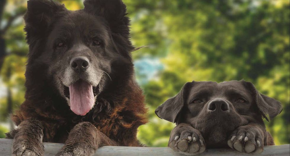 Los Reyes es una película con dos perros como protagonistas.