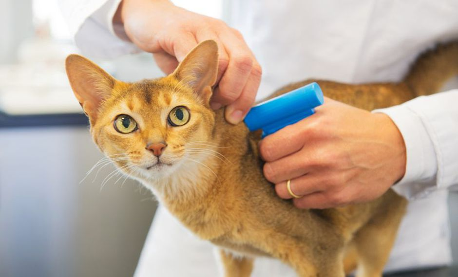 Organizan campaña de registro con microchip para mascotas