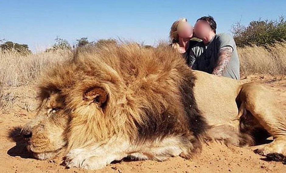 Facebook: indignación por pareja de cazadores que mató a león y celebraron con un beso