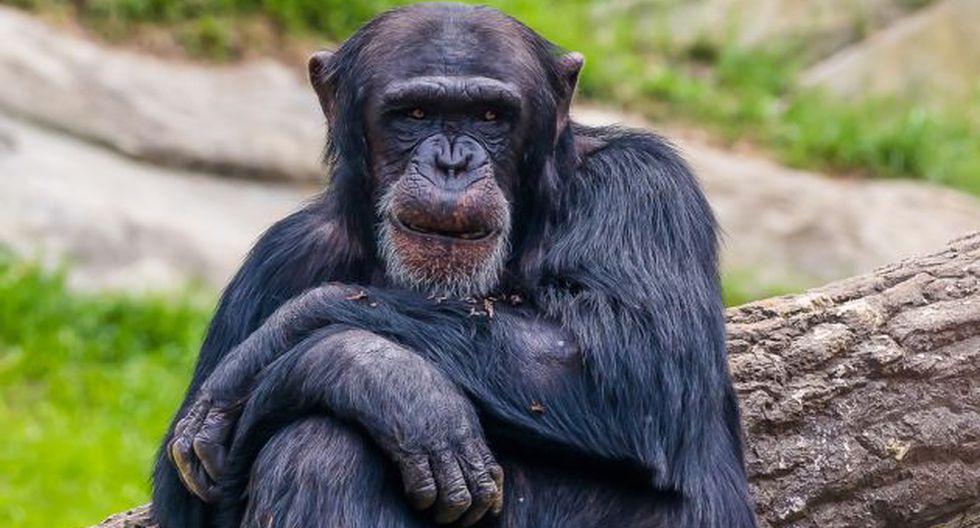75 por ciento de primates tiene poblaciones en declive. (Foto referencial: Shutterstock)