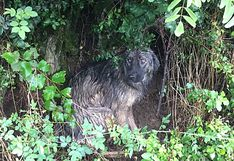 Encuentran perro abandonado en alejada carretera bajo la lluvia