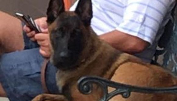 Facebook: Lost Dog Search Team