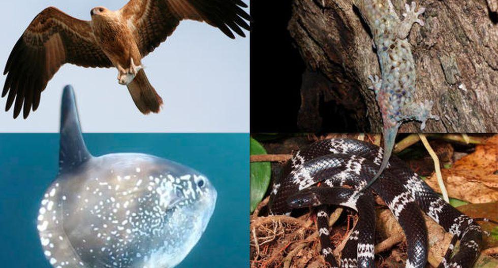 Mongabay Latam hizo un recuento de los extraños animales descubiertos alrededor del mundo.